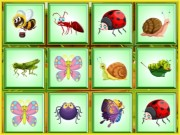 Play Find the Insect Game on FOG.COM