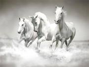 Play Horses Puzzle Game on FOG.COM